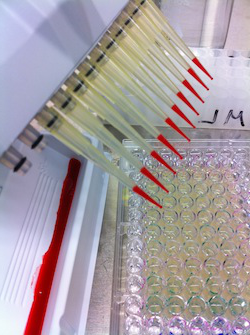 Photo: assays being used in lab